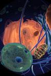 cellcellcell liten